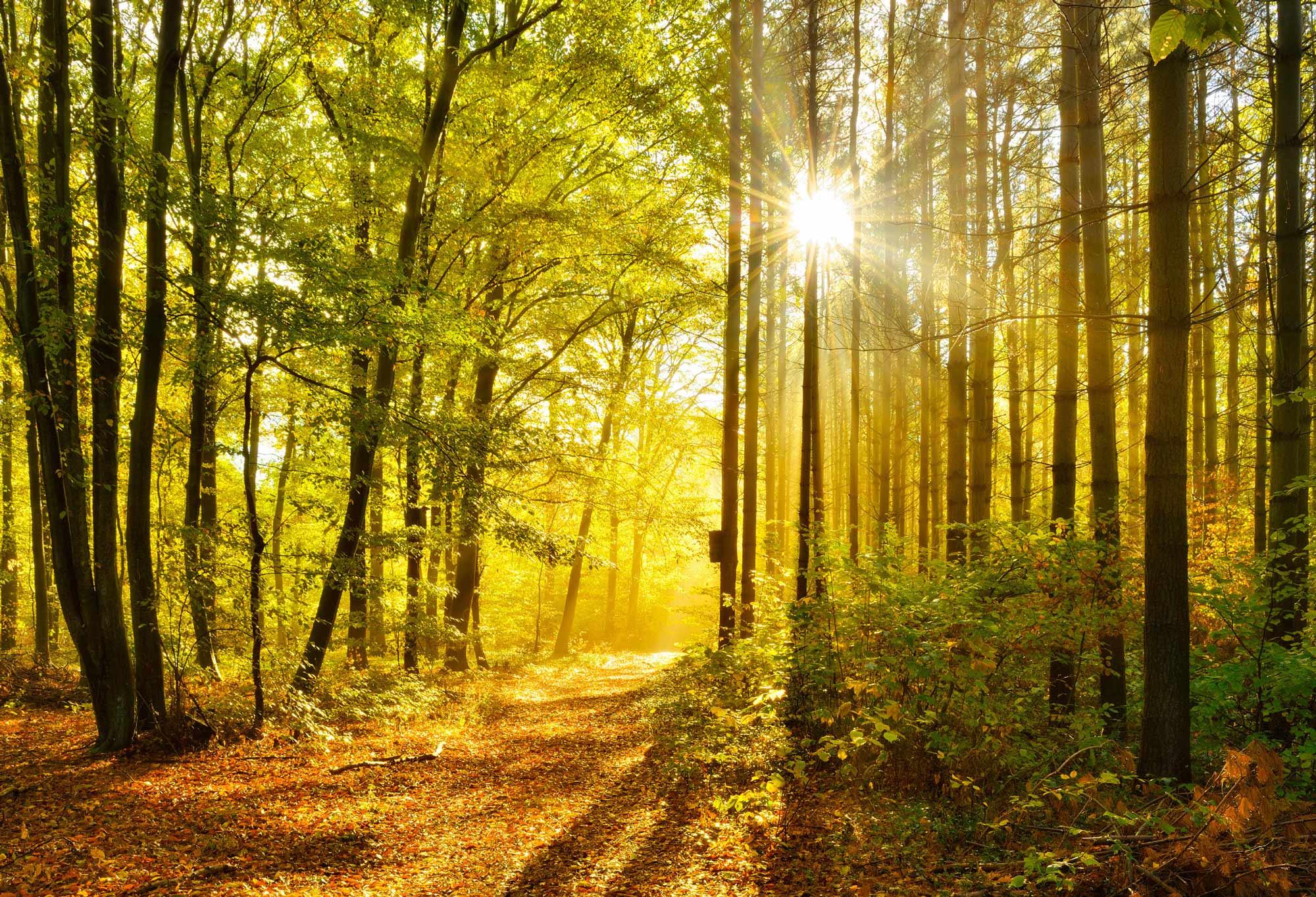 Hintergrundbild Goldener Herbst